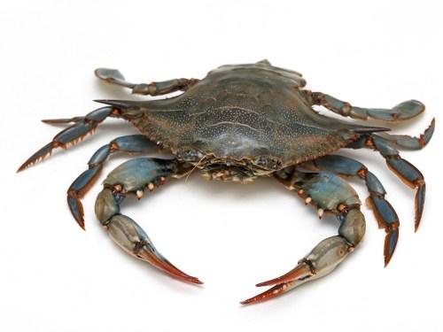 Watarigani – Gazami Crab