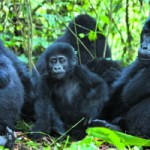 Zoo operators in Nigeria launch association