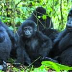 Zoo operators in Nigeria launch association