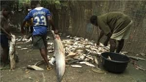 Fish farmers