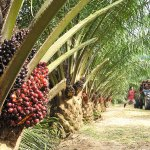 CBN supports 849,480 rice farmers with N146bn; Commits N30bn to oil-palm production – Emefiele