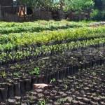 Why we must plant trees in Gombe … Yusuf Dambayo