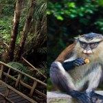 World Tourism Day: NCF showcases Nigeria's rich urban, conservation, biodiversity park