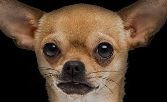 Are your sales people Alsatians or Chihuahuas?