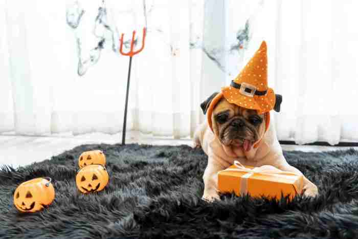 Costumes For Your Pets