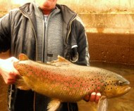 Beautiful trout caught from the surrounding river.