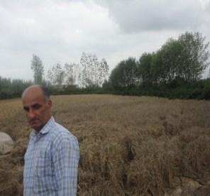 dry field 2