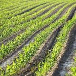 Agriculture the basis of Life
