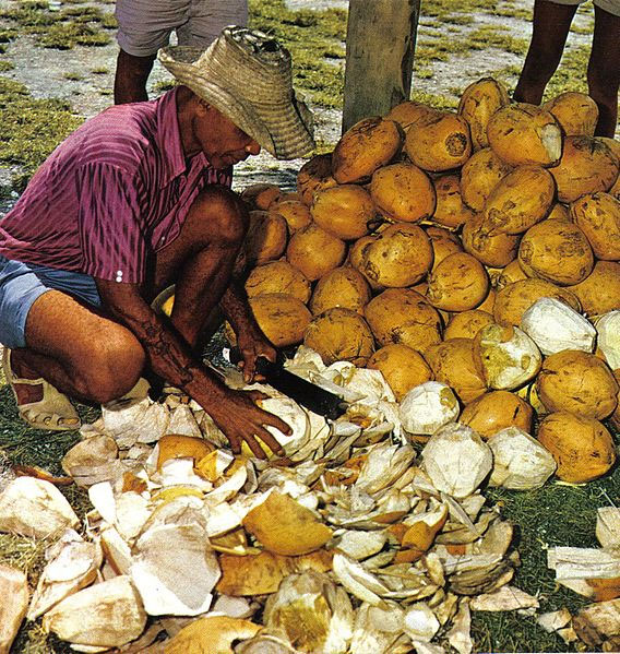 Cutting open young coconuts for drinking, Seychelles. Photo by  Dino Sassi.