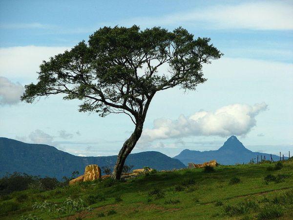 Ambewela, Sri Lanka. Photo by Anuradha Ratnaweera.