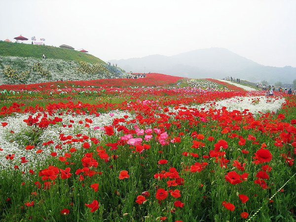 The Flower Village of Paju City by Ben Hur.