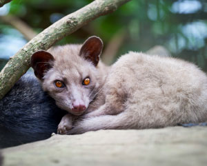 TAMING CIVETS  The CIVETS affiliation—Colombia, Indonesia, Vietnam, Egypt, Turkey, South America—shares a name with a tropical forest-dwelling mammal that encompasses more than a dozen species.