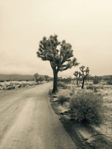 Joshua Tree National Park. - Member Norman W.