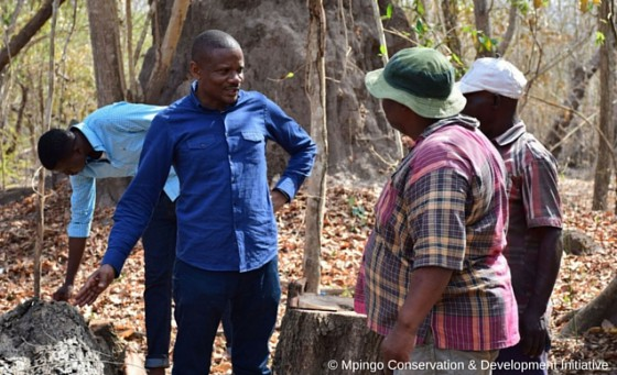 CLP Alumni, Jaspar Makala, at work for the Mpingo Conservation & Development Initiative. The mpingo project has been previously funded by both GTC and CLP. Credit: Mpingo Conservation & Development Initiative