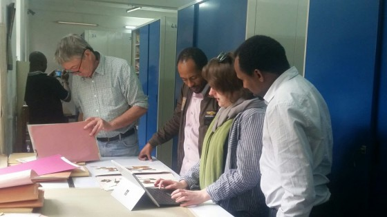 Working in the University of Addis Ababa Herbarium to create maps for the assessments. Credit; Kirsty Shaw.