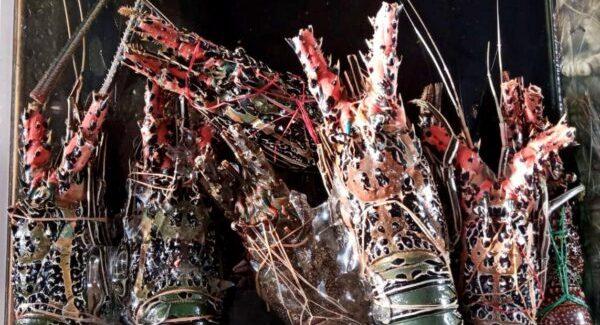 Reasonably priced lobsters in Jimbaran Beach Bali during Covid