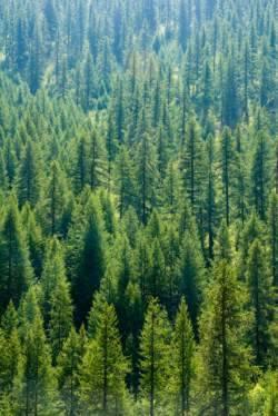 Restoration and Conservation New Goals for U.S. Forest Management