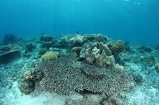 Research Shows Increasing Rate of Ocean Acidification