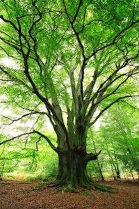 Plant-a-Tree Program Helps Blogs Reduce Their Carbon Footprint