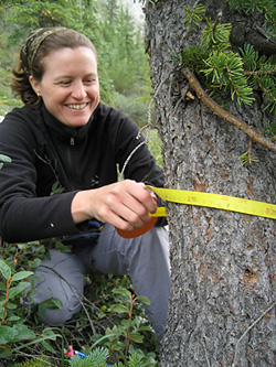 White Spruce Growing Well in Face of Warming Climate at Alaska Firth River Study Site