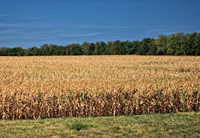 Drought Conditions Threaten US Corn Crop, Farmers, Local Economies