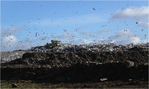 What Effect Does Ink Cartridge Waste Have on the Environment