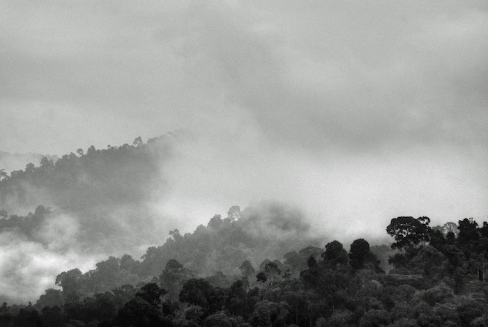 Forests as Rainmakers: New Study Lends Credence to Controversial Theory
