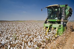Congress Submits to Monsanto as Consumers Start Growing Their Own Food