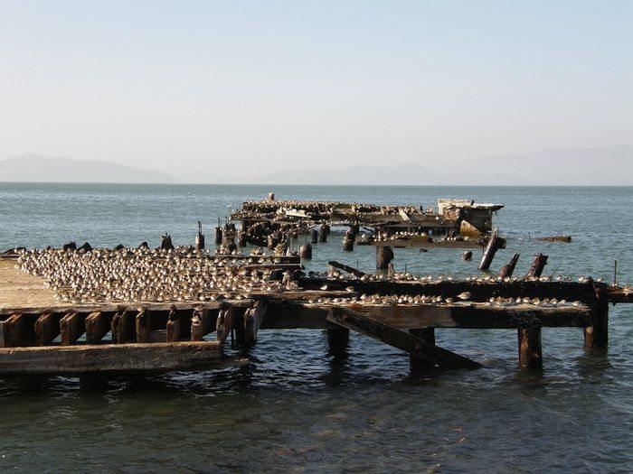 Sea Level Rise: Adaptation Strategies for the San Francisco Bay Area
