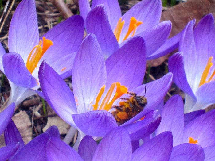 Latest Research on Bee Attrition: Why We Need to Act and What We Need to Do