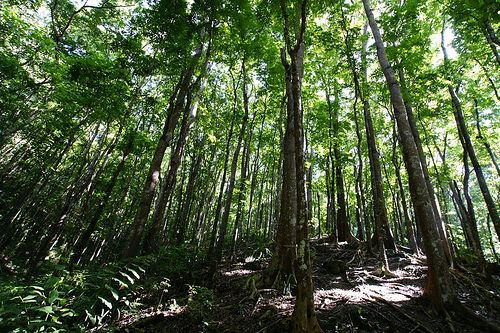 Forest Management, Cultivation Key for Sustainability and a Healthy Planet