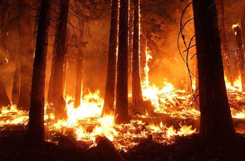 The Dangerous Feedback Loop Between Wildfires and Climate Change
