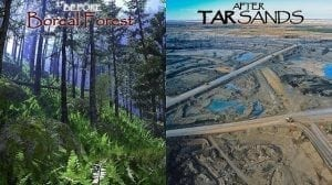 A boreal forest before tar sands development, and after
