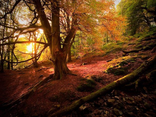 Bringing awareness to the vital importance of forests: The International Day of Forests
