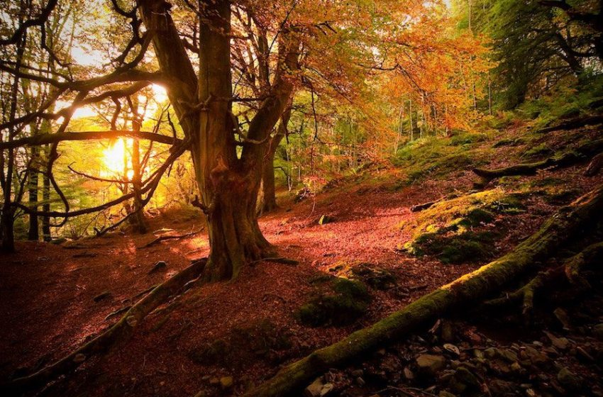 Hug a Tree: International Day of Forests