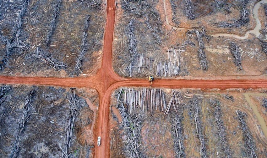 Deforestation in Indonesia: Turning Rainforest into Palm Oil