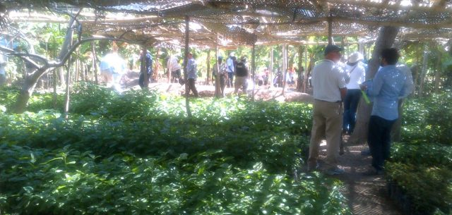 Timberland Study Leads to Plans to Revive Haitian Smallholder Cotton Farming, Export