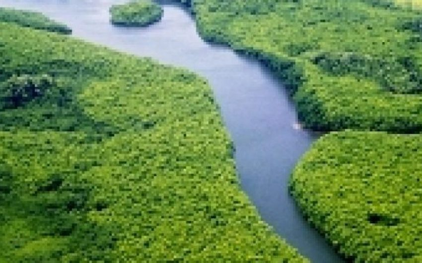 Mangroves for the Future, FAO Launch Regional Sustainable Financing Project
