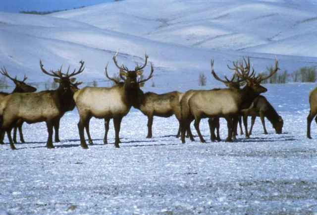 Don't allow drilling in the Arctic National Wildlife Refuge