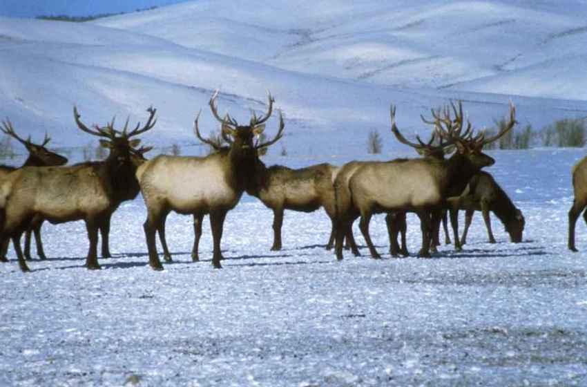 Arctic National Wildlife Refuge in GOP Budget Crosshairs