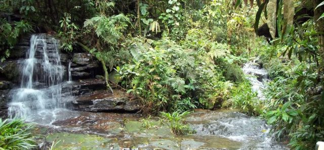 Poseidon Foundation invests in restoration of forests