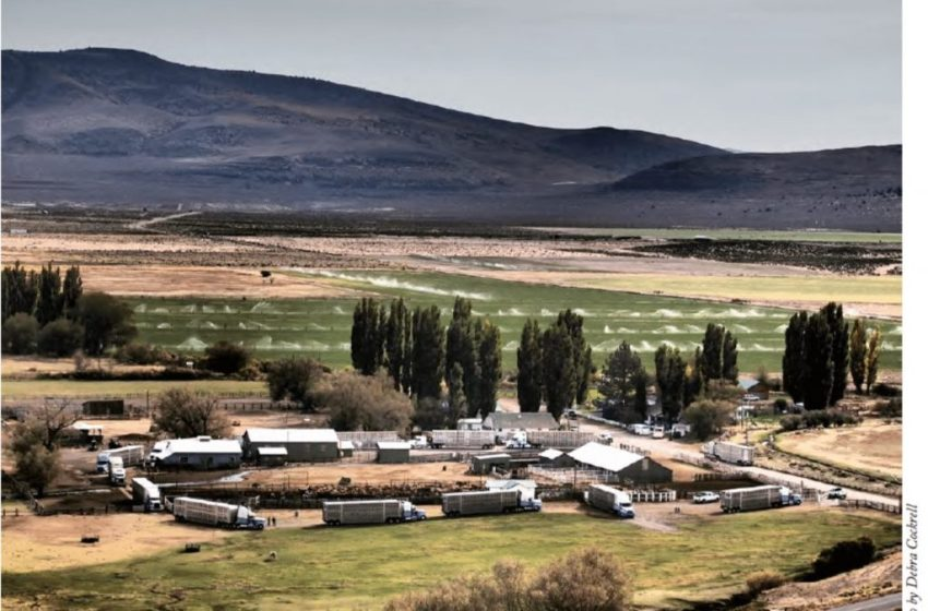 Achieving Net Zero Carbon Yields Dividends for Sheep and Cattle Ranch