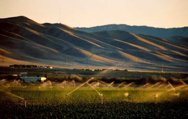 Irrigating crops with produced water