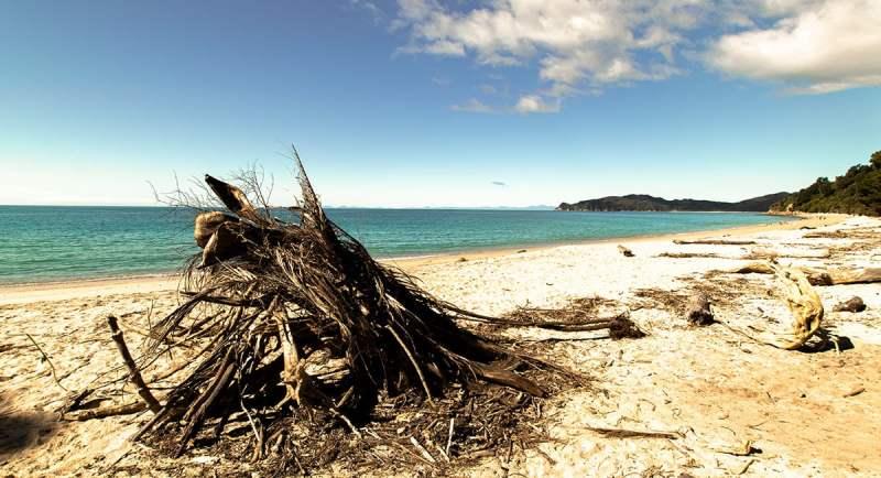 Plage le long d'Abel Tasman Coastal Track en Nouvelle Zélande sur l'île du Sud