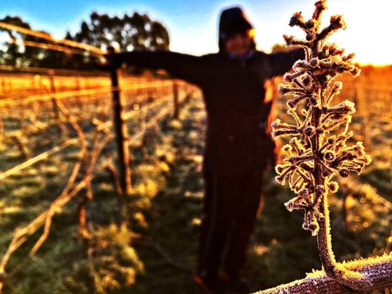 Travailler dans les vignes en Nouvelle Zélande