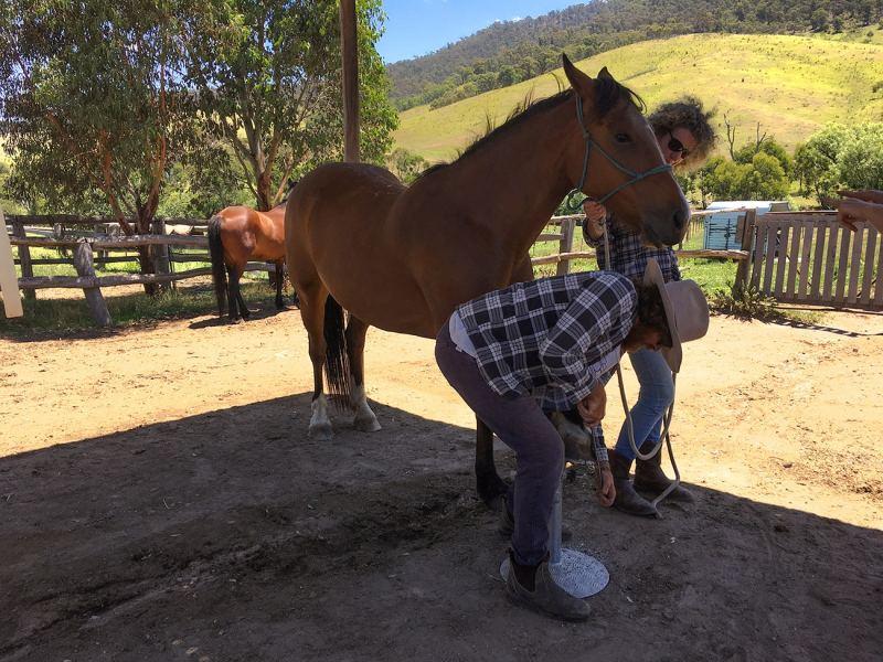 Travailler dans un ranch en Australie et s'occuper des chevaux