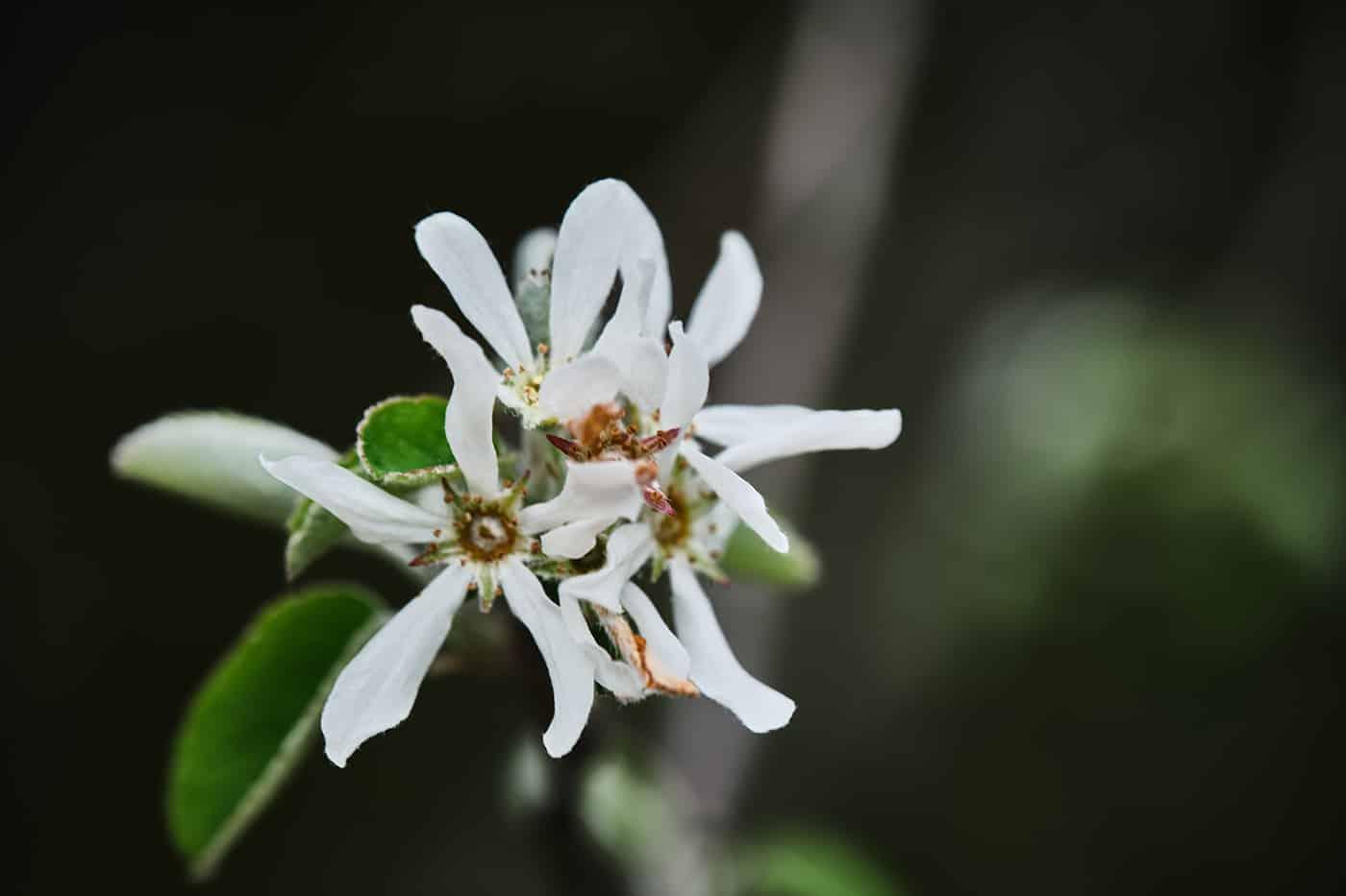 Flore de Lozère