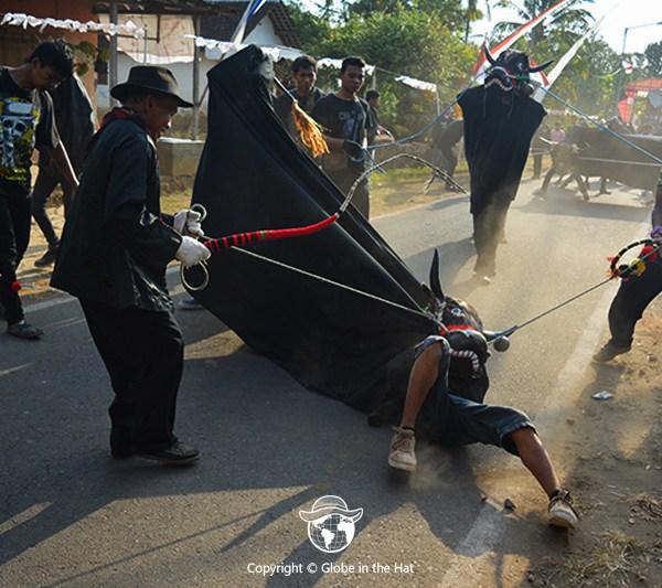 Bantengan Event In Indonesia