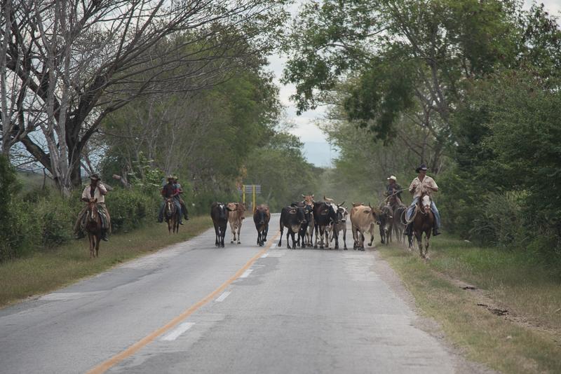 Cuba - Santiago - à cheval