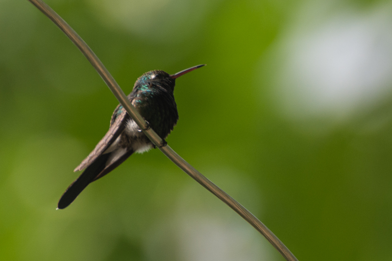 Cuba - parc naturel El Yunque